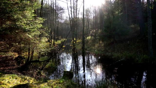 four seasons  - jahreszeit stock-videos und b-roll-filmmaterial