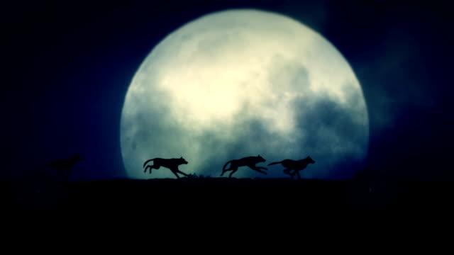 four wolves running at night on a full moon background - lupo video stock e b–roll