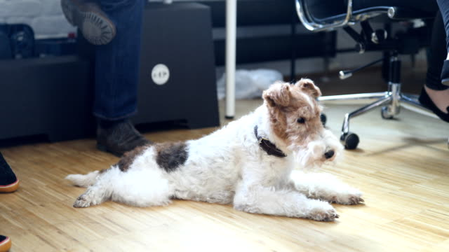 fox terrier amidst professionals in office - terrier video stock e b–roll