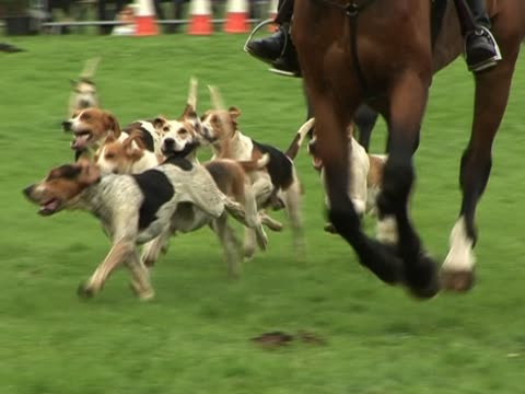 Foxhounds Hunting - Slow Motion