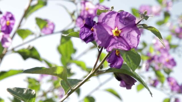 Foz do Arelho plant flower video