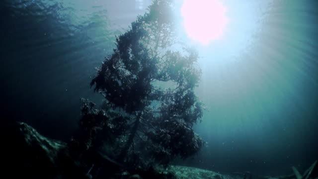 vídeos de stock, filmes e b-roll de fragmentos de árvores e grama na paisagem subaquática do lago fernsteinsee. - tyrol state austria