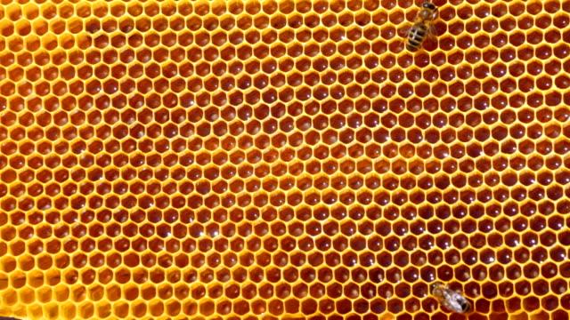 Frame mit Biene honeycombs mit honey and bees – Video