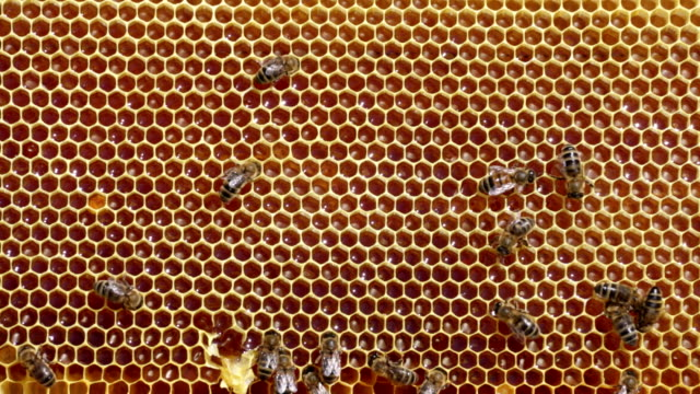 Frame with bee honeycombs video