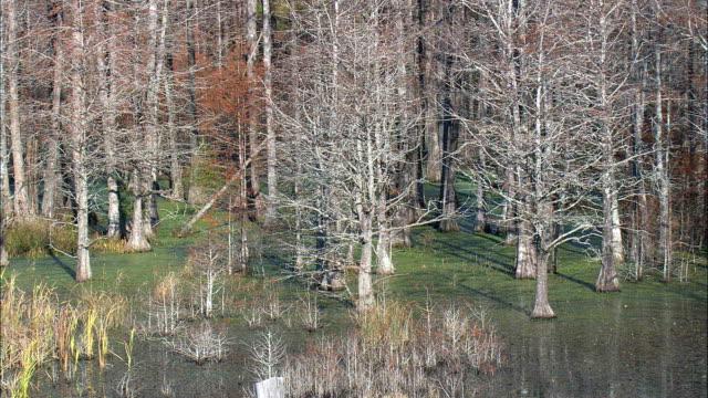 francis marion ulusal ormanı - havadan görünümü - güney carolina, charleston county, amerika birleşik devletleri - fransa kralı i. fransuva stok videoları ve detay görüntü çekimi