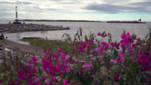fraser river flowers and barges 4k. uhd - fiume fraser video stock e b–roll