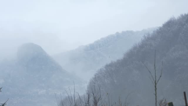 Freezed Forests and Mountains video