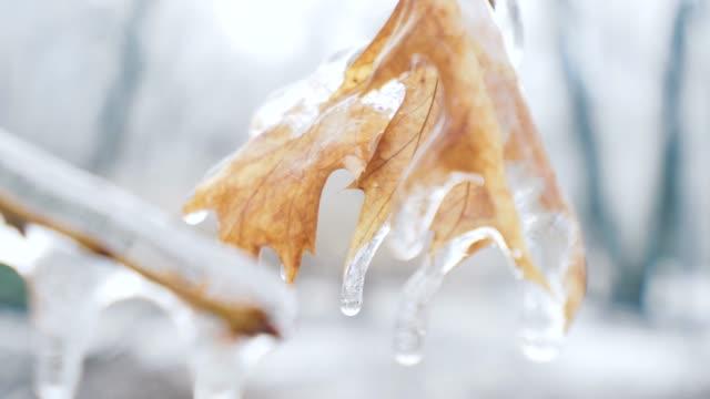 eisigen regen-effekt. - laub winter stock-videos und b-roll-filmmaterial