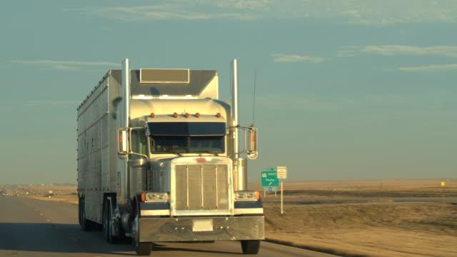vídeos de stock, filmes e b-roll de close up frete gado recipiente semi caminhão transportando gado na estrada - manada