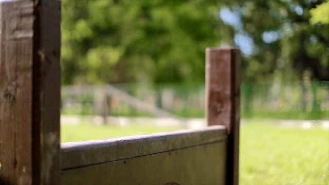 vídeos y material grabado en eventos de stock de bulldog francés capacitación con obstáculo en parque para perros - valla artículos deportivos