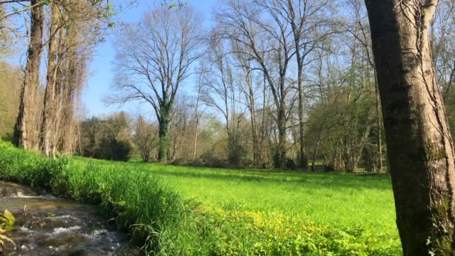 French Countryside with Field, Stream and Trees in Spring Landscape of the French countryside in Poitou-Charentes in Spring showing part of a tree, stream and green meadow with forest in the background and a blue sky running water stock videos & royalty-free footage