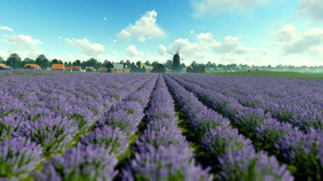 franska lavendel byn med gammal väderkvarn mot blå himmel, tilt - fransk kultur bildbanksvideor och videomaterial från bakom kulisserna