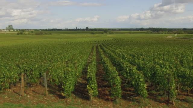 French vineyards video