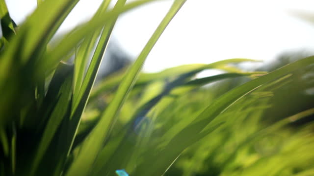 DOLLY Fresh and green spring grass video