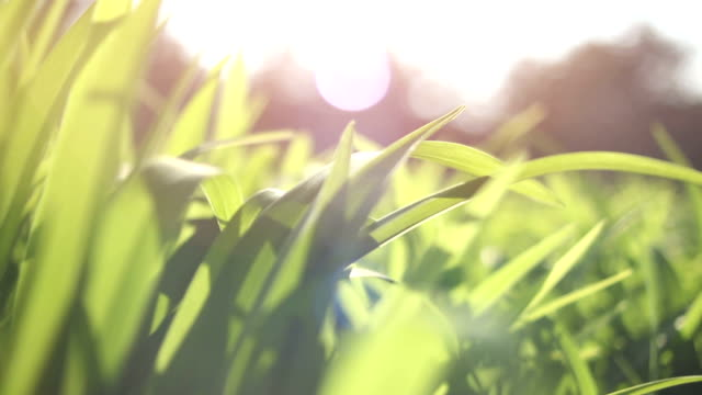 DOLLY Fresh and green spring grass Dolly shot of fresh and green spring grass grass area stock videos & royalty-free footage