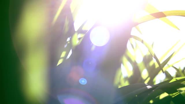 돌리 신선 하 고 녹색 봄 잔디 - 초점 이동 스톡 비디오 및 b-롤 화면