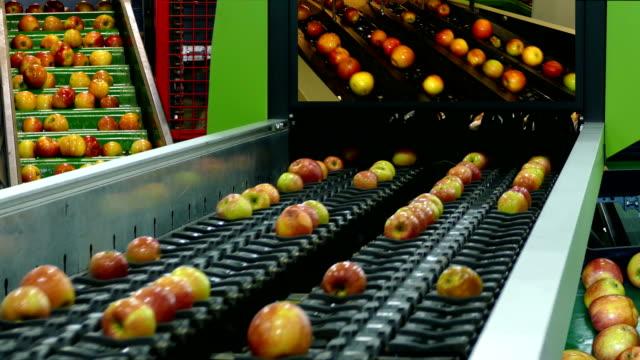 taşıma kemeri üzerinde taze elma - gıda ve i̇çecek sanayi stok videoları ve detay görüntü çekimi