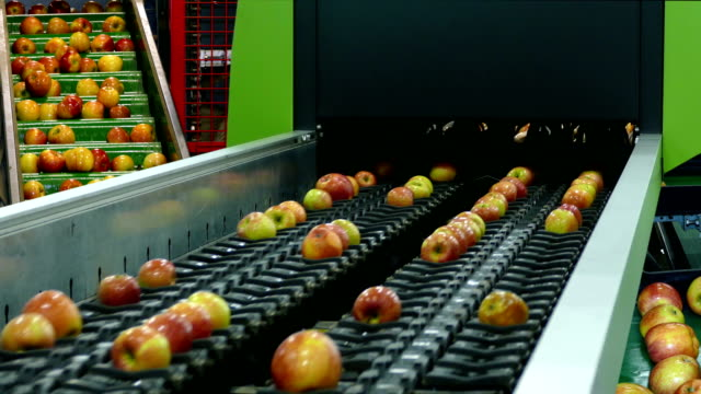 Fresh Apples On Conveyor Belt video