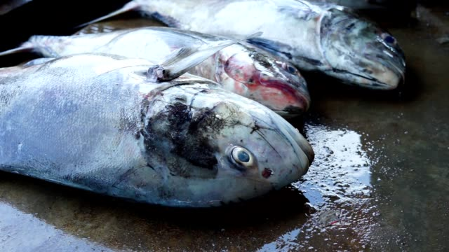 fresh big gt (giant travelly) for sale at seafood market - banchi di pesci video stock e b–roll