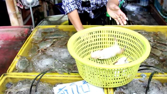 Fresh Blue swimming crabs. video