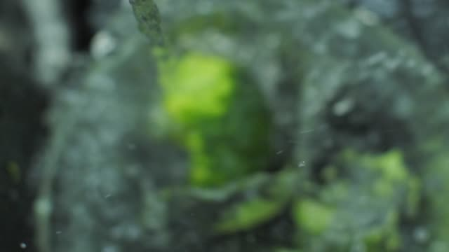 Fresh broccoli splashing into the water slow motion video