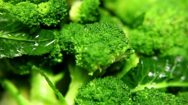 fresco broccoli - broccolo video stock e b–roll