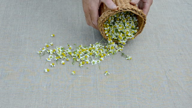 fresh chamomile blossoms on linen cloth video