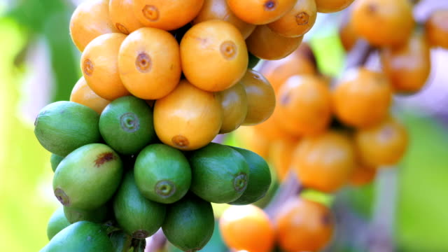 Fresh Coffee Beans video