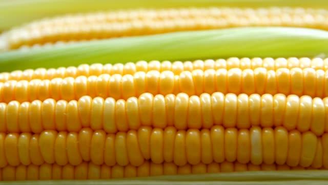färsk majs närbild - skalhylsa bildbanksvideor och videomaterial från bakom kulisserna