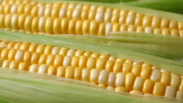 fresh corn on the cob - skalhylsa bildbanksvideor och videomaterial från bakom kulisserna