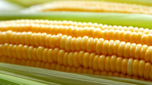 färsk majs - skalhylsa bildbanksvideor och videomaterial från bakom kulisserna