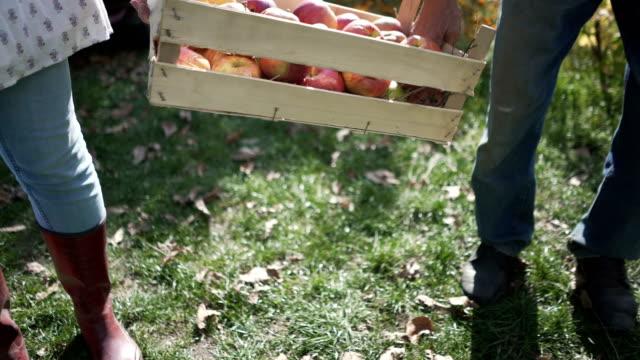 vídeos de stock e filmes b-roll de fresh country fruit - engradado