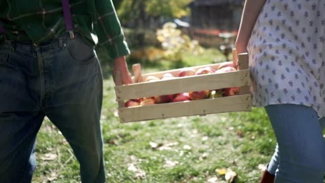 färsk land frukt - fruktträdgård bildbanksvideor och videomaterial från bakom kulisserna