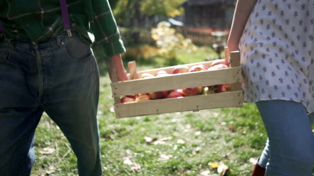 vídeos de stock e filmes b-roll de fresh country fruit - picking fruit