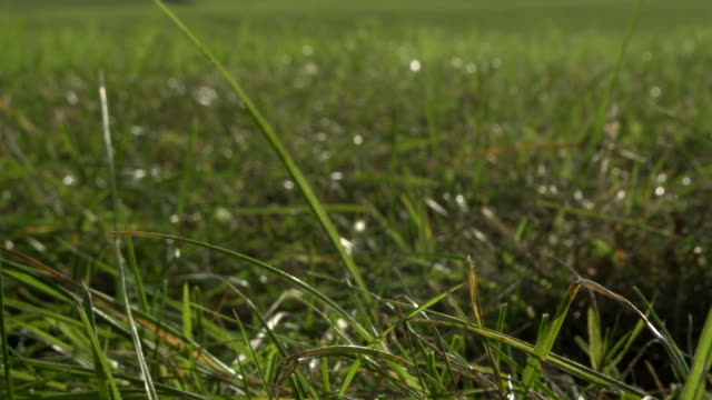 Fresh countryside field with newly sown grass seeds creating a healthy pasture video
