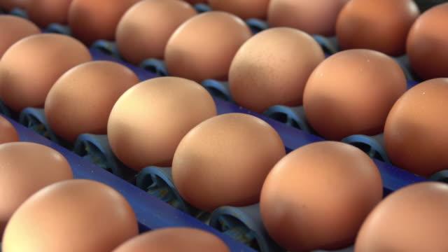 Fresh eggs in a farm