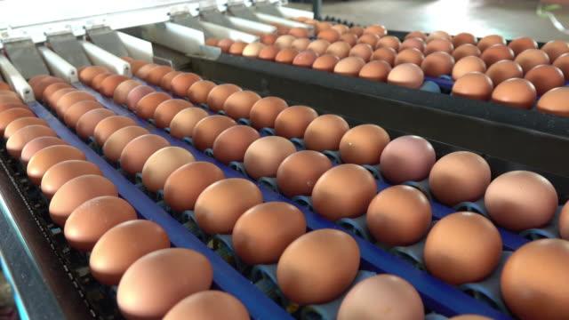 vídeos de stock, filmes e b-roll de ovos frescos em uma fazenda - ave doméstica