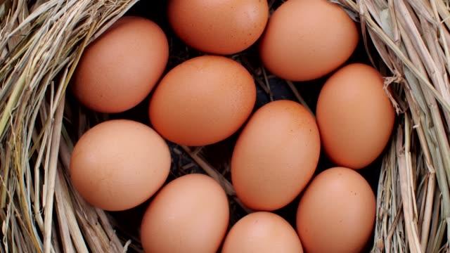 巣の中の新鮮な卵 - 籠点の映像素材/bロール