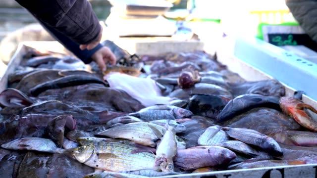 stockvideo's en b-roll-footage met verse vis levend van middellandse zee - footage video 4k - marseille