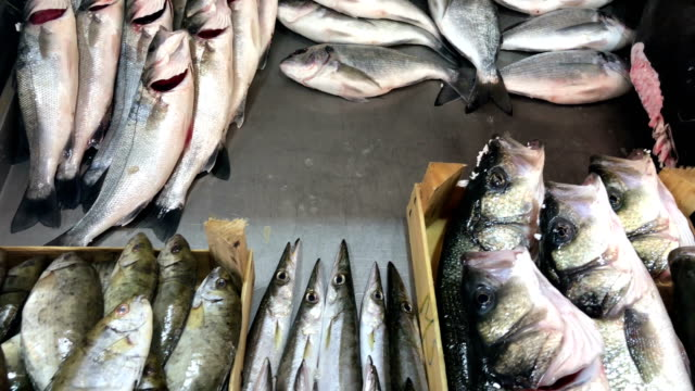 fresh fish at the market - луциан стоковые видео и кадры b-roll