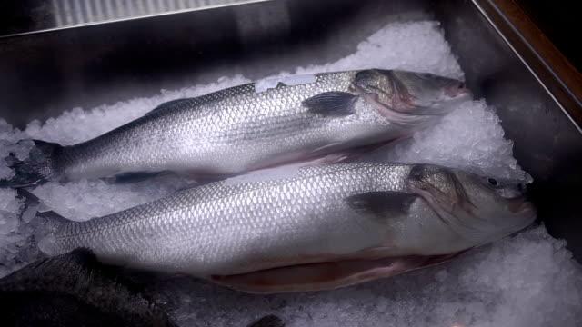 frischer fisch in eis auf dem counter-markt - fang stock-videos und b-roll-filmmaterial