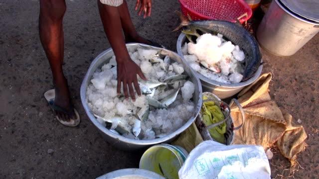 frischer fisch aus metall töpfen mit tamil nadu, indien - ichthyologie stock-videos und b-roll-filmmaterial