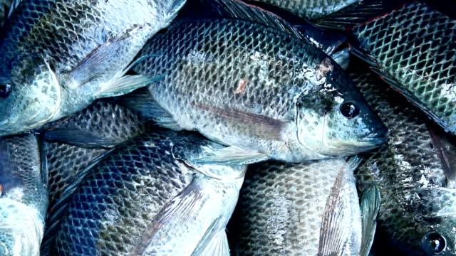 vídeos de stock e filmes b-roll de fresco peixes - cheiro desagradável