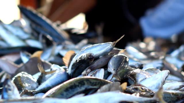 Fresh fishes form Andaman sea video