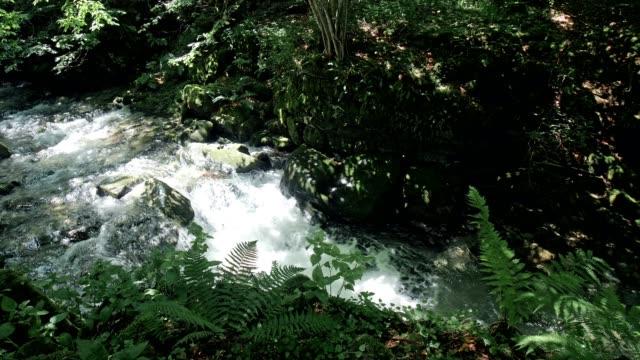 flödande mountain river färskvatten - städsegrön växt bildbanksvideor och videomaterial från bakom kulisserna