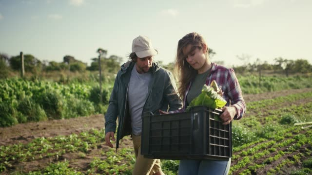 vídeos de stock e filmes b-roll de fresh food is the best food - farmer