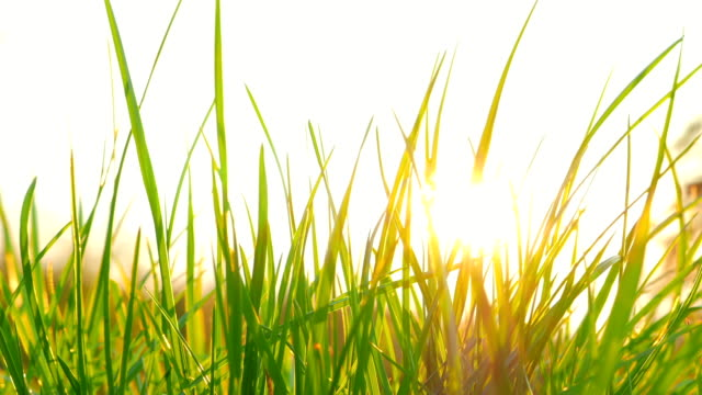 Fresh grass and the sun Fresh grass and the sun blade of grass stock videos & royalty-free footage