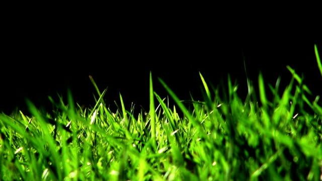 Fresh Grass video
