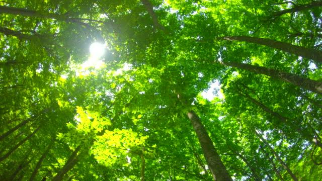 taze yeşil kayın ormanı - kubbe stok videoları ve detay görüntü çekimi