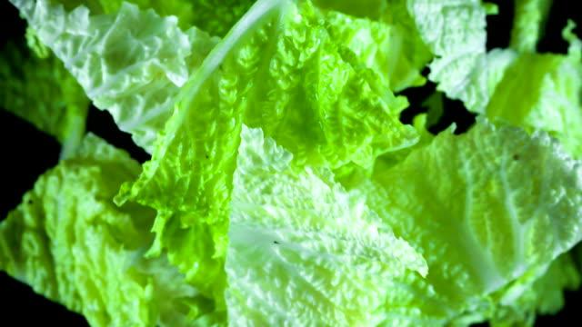 vídeos y material grabado en eventos de stock de hojas de repollo verde fresco - pak choy